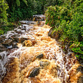 Coal Creek Rapids by Robert Green