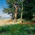 Coast by Axel Hjalmar Lindqvist