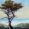Coast Cypress by Carolyn Jarvis