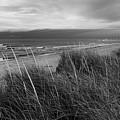 Coast Guard Beach Cape Cod Bw by Bill Wakeley