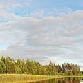 Coast Of Summer Lake Shined With Sun Beams by Vadzim Kandratsenkau