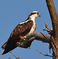 Coastal Bird Of Prey by Dan Williams