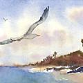 Coastal Flight by Amy Kirkpatrick
