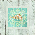 Coastal Trade Winds 4 - Driftwood Precious Wentletop Seashell by Audrey Jeanne Roberts
