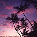 Coastline Palms by Ron Dahlquist - Printscapes