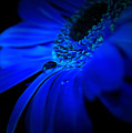 Cobalt Blues by Krissy Katsimbras