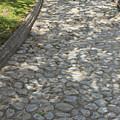 Cobblestone Path In A Park by Robert Hamm