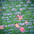 Cobblestone Path by Rhianna Wurman