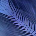 Cobweb by Michal Boubin