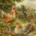 Cochin China Fowls by George Hickin
