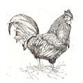 Cock Of The Walk by Deborah Wetschensky