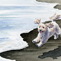 Cockapoo At The Beach by David Rogers