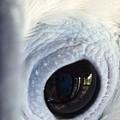 Cockatiel Eye by Teresa Doran