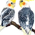 Cockatiels by Kristen Wesch