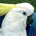 Cockatoo Bird by Haleh Mahbod
