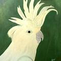 Cockatoo by Guillermo Mason