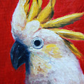 Cockatoo by Jill Ciccone Pike