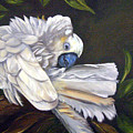 Cockatoo Preening by Anne Kushnick