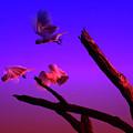 Cockatoos In The Twilight by Douglas Barnard