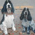 Cocker Spaniels by Suzie Majikol Maier