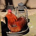 Cockerel And Storm Lamp by Jeff Townsend