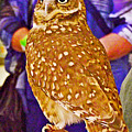 Coco The Burrowing Owl In Living Desert Zoo And Gardens In Palm Desert-california by Ruth Hager