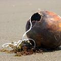 Coconut Beach by Jez C Self