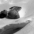 Coconut On The Beach by Robert Wilder Jr