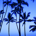 Coconut Palms At Dawn by Dana Edmunds - Printscapes