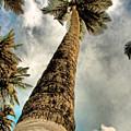 Coconut by Galeria Trompiz