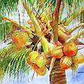 Coconut Tree by Jelly Starnes