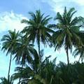 Coconut Trees by Nicholas Lim