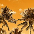 Coconut Trees by Richard Sugden