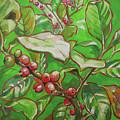 Coffee Cherries by Sanae Yamada