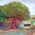 Coffee Tree Aauj by Robert Gravelin