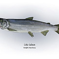 Coho Salmon by Ralph Martens