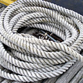 Coiled Rope  by Barbara Griffin