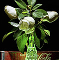 Coke And Magnolia Still Life by JC Findley