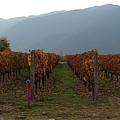 Colchagua Valley Vinyard II by Brett Winn