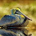 Cold Brown Pelican by Bill Barber