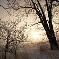 Cold Morning by Amanda Kiplinger