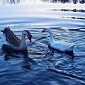 Cold Morning Swim 2 by Niioko Landers
