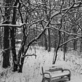 Cold Seat by Lauri Novak