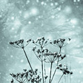 Cold Winter by Benjamin Harte