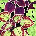 Coleus And Fern by Tammie Painter
