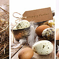 Collage Of Assorted Egg Images  by Sandra Cunningham