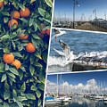 Collage Of Cyprus Images by Mariusz Prusaczyk