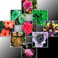 Collage Of Spring Flowers by Cate Franklyn
