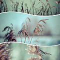 Collage Of Winter Grass by Mariusz Prusaczyk