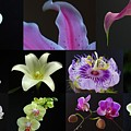 Collection Of Flowers Over Black  by Juergen Roth